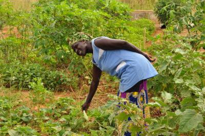 TG Landwirtschaft & Ernährung